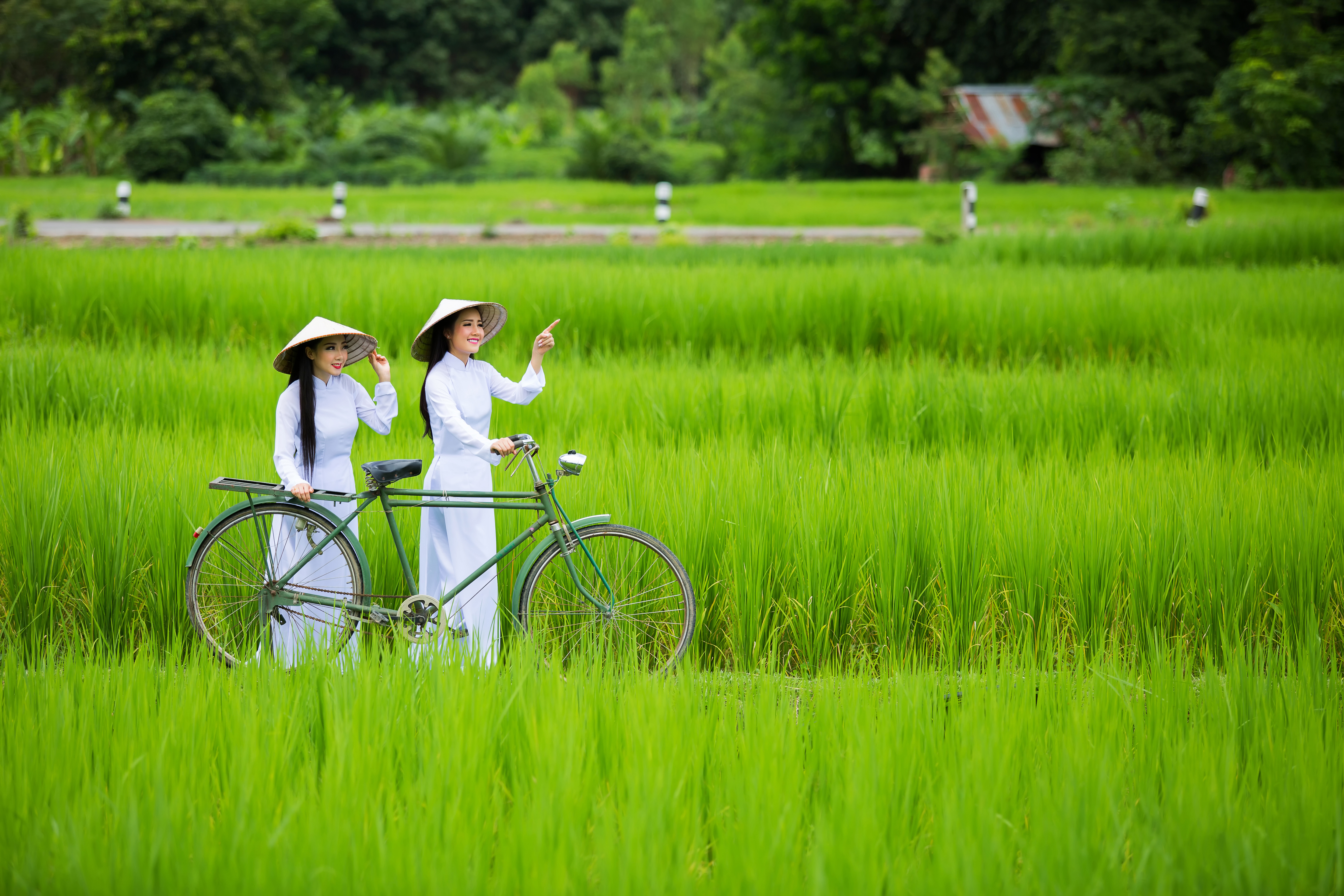 Beautiful woman with Vietnam culture traditional ,vintage style,Hoi an Vietnam,Mu Cang Chai